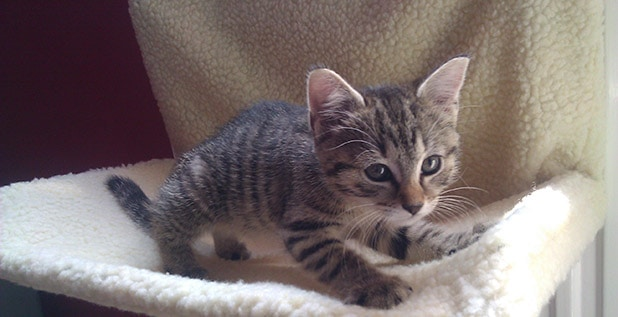 Link Building Kitten